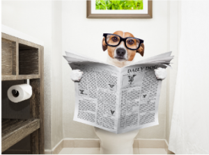 Dog on the toilet